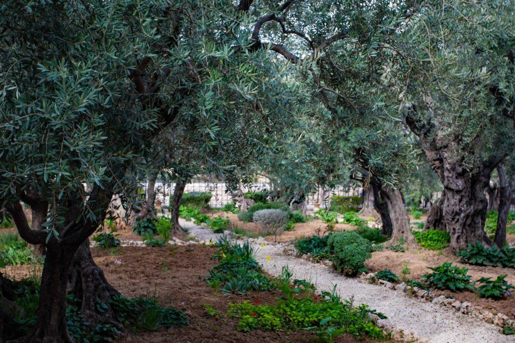 Garten Gethsemane Jerusalem